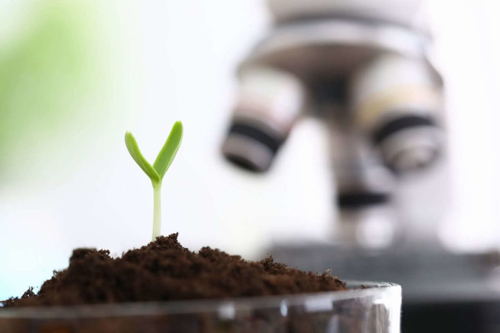 Successfully Growing Green Sprout