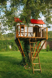 Make a Tree Fort